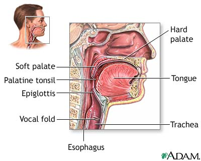 Anatomy of Throat and Esophagus