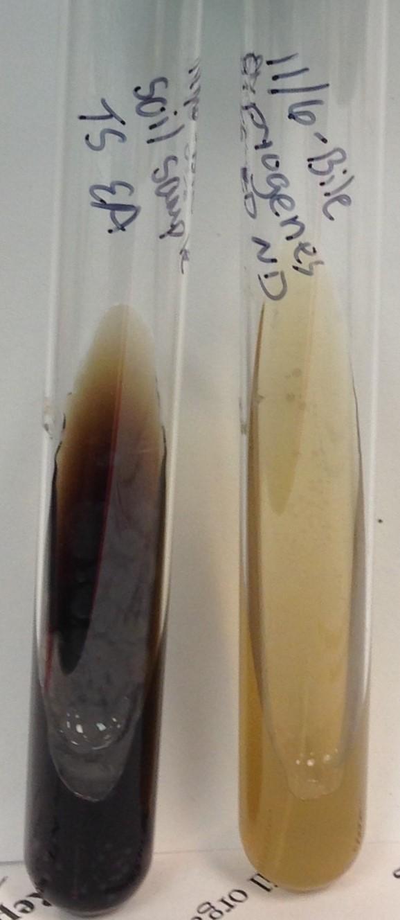 soil sample number 13