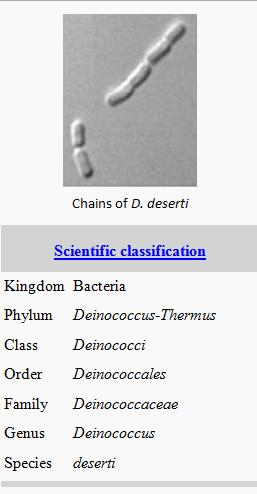 D deserti scientific classification.jpg