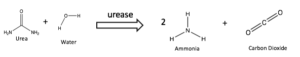 File:Urease catalyzed decomposition.png