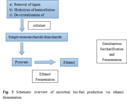 bio fuels of yeast fermentation essay