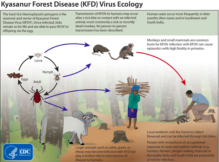 This figure was obtained from the CDC's informational website on the Kyasanur forest disease virus.
