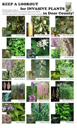 Common invasive plants.jpg