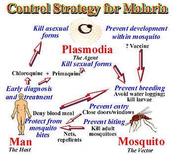 infectious disease and malaria vaccine essay Evidence of bias in studies of influenza vaccine effectiveness in elderly patients malaria control, elimination the idsa journals app gives you the freedom to read the journal of infectious diseases both online and offline, on your ipad, iphone.