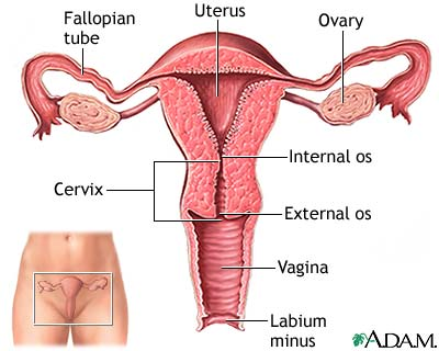 Talk, what Cunt uterus swell thought