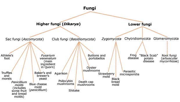 classification of fungi alexopoulos and mims 1979 pdf download