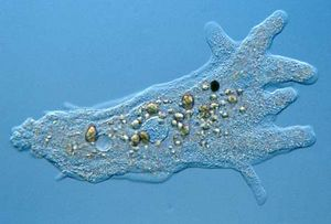 Bacterial Ecology