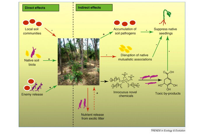 Microbes and invasive plants microbewiki for 0 4 soil carbon