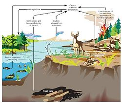[Ponds have different habitats for different microbes depending on depth ]