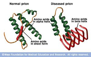 Image result for prions