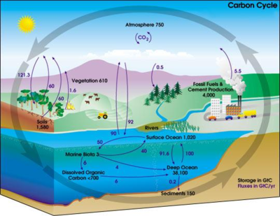 freshwater lakes - microbewiki the nitrogen cycle diagram freshwater wetland easy diagram of the nitrogen cycle