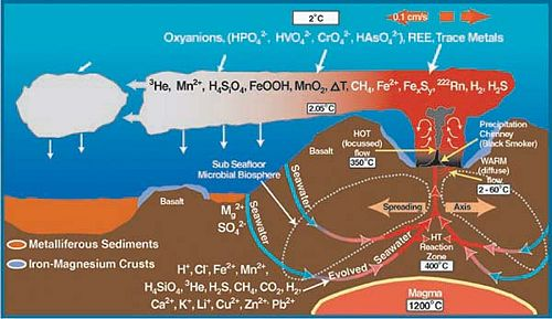 chemosynthesis process organisms manufacture food using The tubeworms and mussels depend upon chemosynthetic bacteria for food, and   it uses the process of chemosynthesis to produce carbohydrates from the.