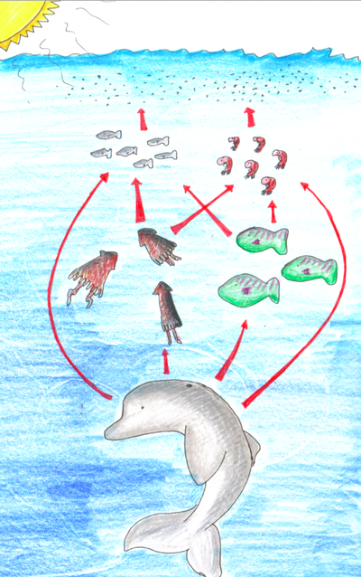 Microbiota Of The Upper Respiratory Tract Of Bottlenose Dolphins
