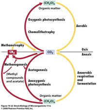 diagram of the carbon cycle diagram of the carbon and nitrogen cycle
