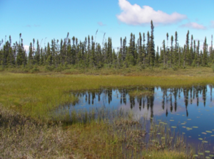 Forms Of Matter >> Peat Bogs - microbewiki