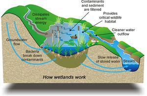 What Is One Way Natural Ecosystems Can Perform Wastewater Treatment