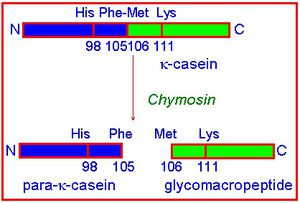 trypsin and casein coursework The protein substrate in this reaction will be trypsin milk protein (casein)  is  missing the depth and detail that would be required for an a2 coursework report.
