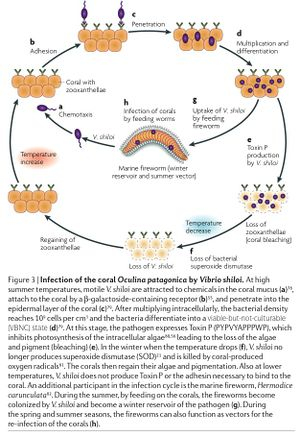 The Hologenome Theory of Evolution - MicrobeWiki