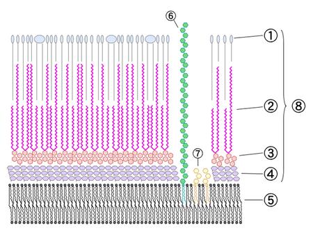 Antiseptic efficacy of benzalkonium chloride  microbewiki