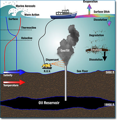 Biodegradation of hydrocarbons from crude oil