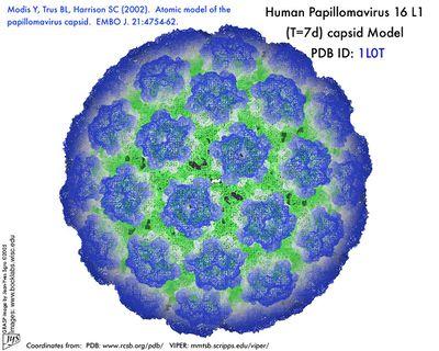 Atomic Model Of Papillomavirus Capsid2 From Virologywiscedu Virusworld Images Hpv Green Blue Mesh