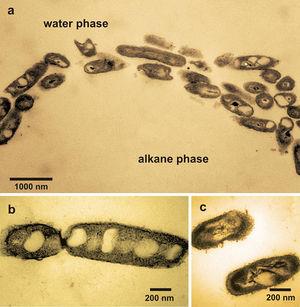 Oil spills  microbewiki