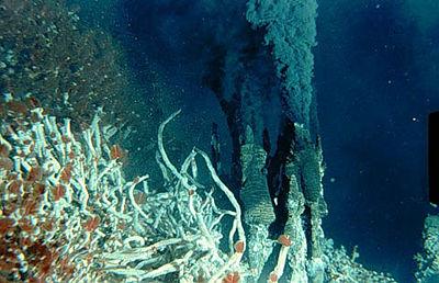 hydrothermal vents plants