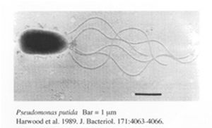 Study of bacteria