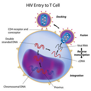hiv/aids in the u.s. - microbewiki hiv cell diagram