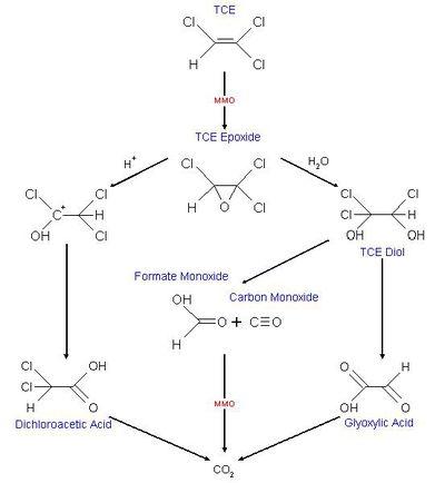 Detoxification Of Groundwater Microbewiki